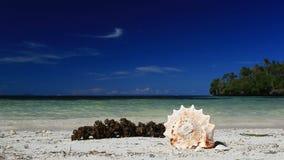 Seashell on tropical beach, Boracay. Philippines stock video