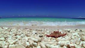 Seashell on tropical beach, Boracay. Philippines stock video footage