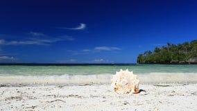 Seashell on tropical beach, Boracay. Philippinesn stock footage