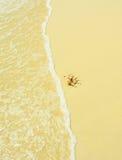 Seashell in una spiaggia fotografia stock