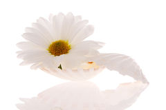 Seashell und Blume stockbilder