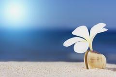 Seashell und Blume auf dem Strand Lizenzfreies Stockfoto