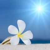 Seashell und Blume auf dem Strand stockfotografie