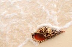 Seashell- und Ozeanwelle Lizenzfreies Stockfoto