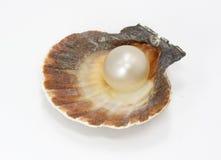Seashell und Perle Stockbild