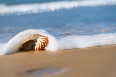 Seashell under sea wave on beach Stock Photos