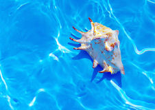 Seashell under water. Azure water background with seashell Royalty Free Stock Photography
