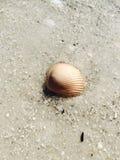Seashell underwater Zdjęcia Stock