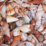 Seashell variety Royalty Free Stock Photos