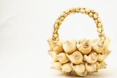 Seashell Vase Closeup Stock Photos