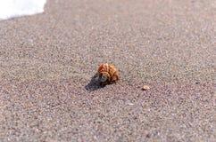 Seashell w piasku obrazy stock