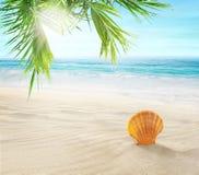 Seashell w piasku Kokosowe palmy na tropikalnej pla?y zdjęcie royalty free