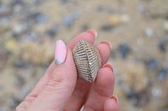 Seashell w ręce Zdjęcie Stock