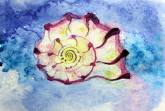 Seashell. Watercolor  geometry spiral sea shell Stock Photography