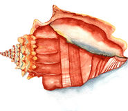 Seashell watercolor Royalty Free Stock Photo