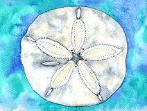 Seashell watercolor Royalty Free Stock Images