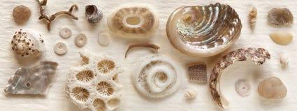 Seashell Wciąż Życie na Pergaminu Papierze Obraz Stock