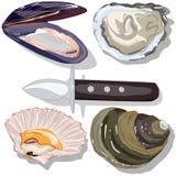 Seashell wektoru kolekcja ilustracji