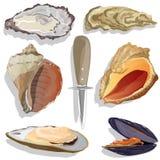 Seashell wektoru kolekcja royalty ilustracja