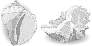 Seashell wektoru kolekcja ilustracja wektor