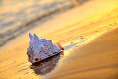 Seashell on wet sand Stock Photography