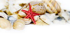 Seashell on white. With a lot of copy space Stock Images