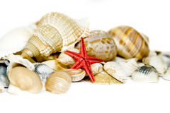 Seashell on white. With a lot of copy space Royalty Free Stock Photo