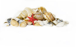 Seashell on white. With a lot of copy space Royalty Free Stock Image