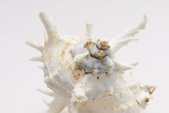 Seashell on the white background Royalty Free Stock Images
