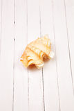 Seashell on white background wooden table. Seashell on  background wooden table Stock Image