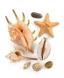 Seashell on white Stock Photography