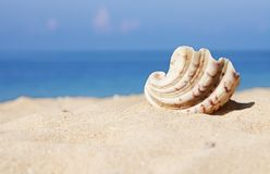 Seashell on the white sand Stock Image