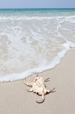 Seashell on white sand beach Royalty Free Stock Photography