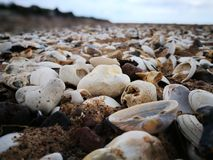 Seashell And White Stones On Seashore Stock Images