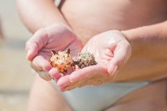 Seashell in woman hands Stock Photography