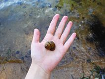 Seashell on the woman`s hand stock image