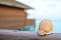 Seashell with a wood house and ocean Stock Image