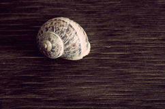 Seashell on wood Stock Images