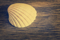 Seashell on wood Stock Image