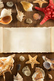 Seashell on wooden background Stock Images