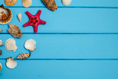 Seashell on wooden background texture. Sea vacation. Seashells frame on blue wood background with copy space on wooden planks, top view Stock Image
