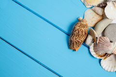 Seashell on wooden background texture. Sea vacation. Seashells frame on blue wood background with copy space on wooden planks, top view Royalty Free Stock Images