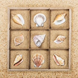 Seashell in a wooden box with sand Stock Photography
