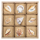 Seashell in a wooden box with sand Stock Photo