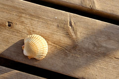 A seashell on a wooden dock. A seashell placed on a wooden dock in the early morning Royalty Free Stock Image
