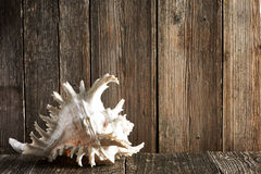 Seashell on wooden table Royalty Free Stock Photo