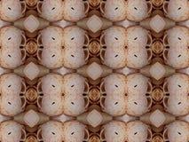 Seashell wzór Fotografia Royalty Free