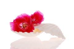 Seashell y flor Imagenes de archivo