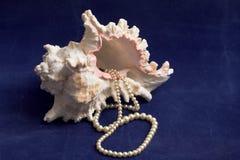 Seashell y perlas Foto de archivo