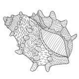 Seashell z wysokimi szczegółami Fotografia Stock